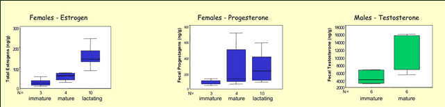 Image with three data charts showing reproductive hormones for female (estrogen, progesterone) and male (testosterone) right whales of varying ages