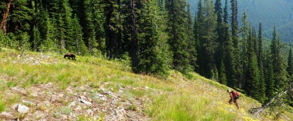 researcher and dog walk up grassy clearing on mountain side