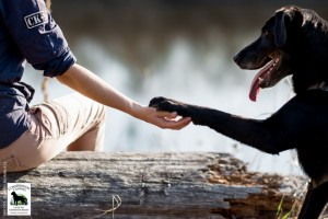 researcher sitting on log with arm outstretched while black lab places it's paw in her hand. The dog's tongue is hanging out and it appears to be smiling