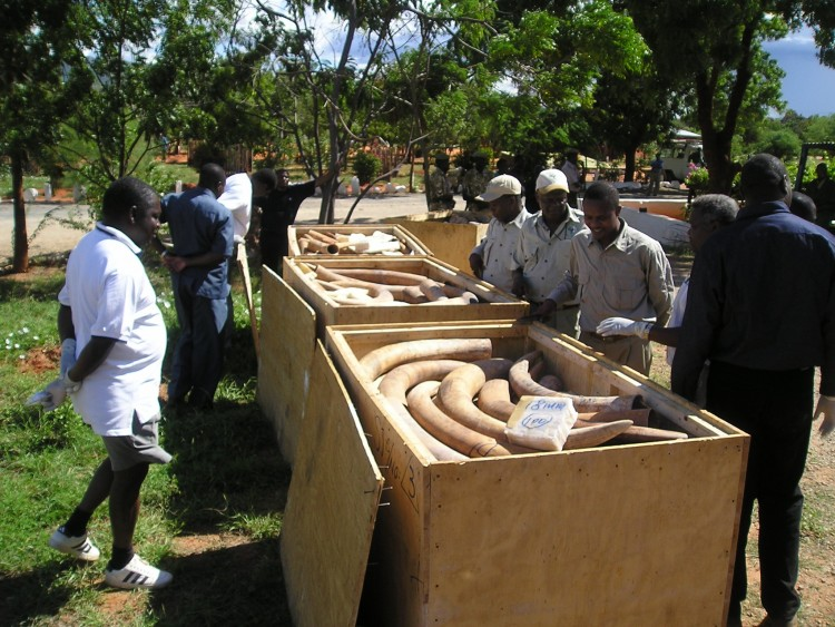 Large wooden crates of tucks are opened while men inspect them