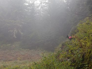 A dog stands on the side of a forested hill surrounded by mist.