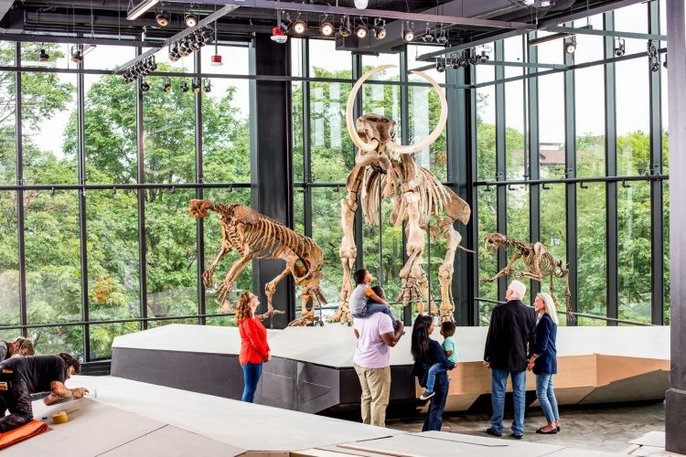 People visit the paleontology room at the New Burke