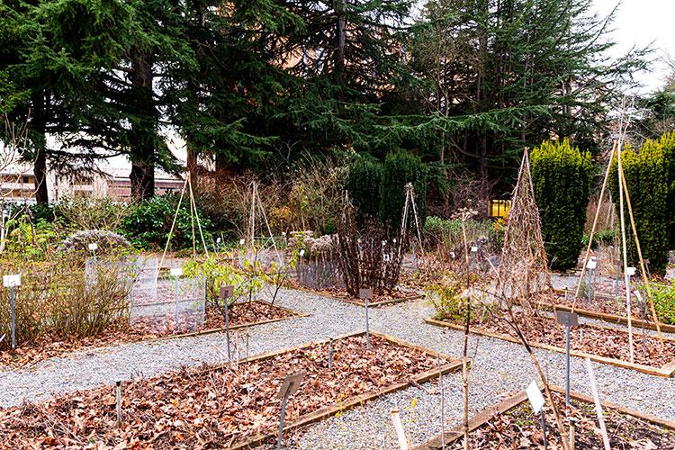 UW Medicinal Garden: rows of plants