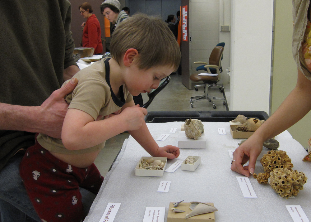 A curious young visitor views some shell fossils from the Burkes paleontology collection during Behind the Scenes night, Jan. 25.| Photo by Peter Kelley.