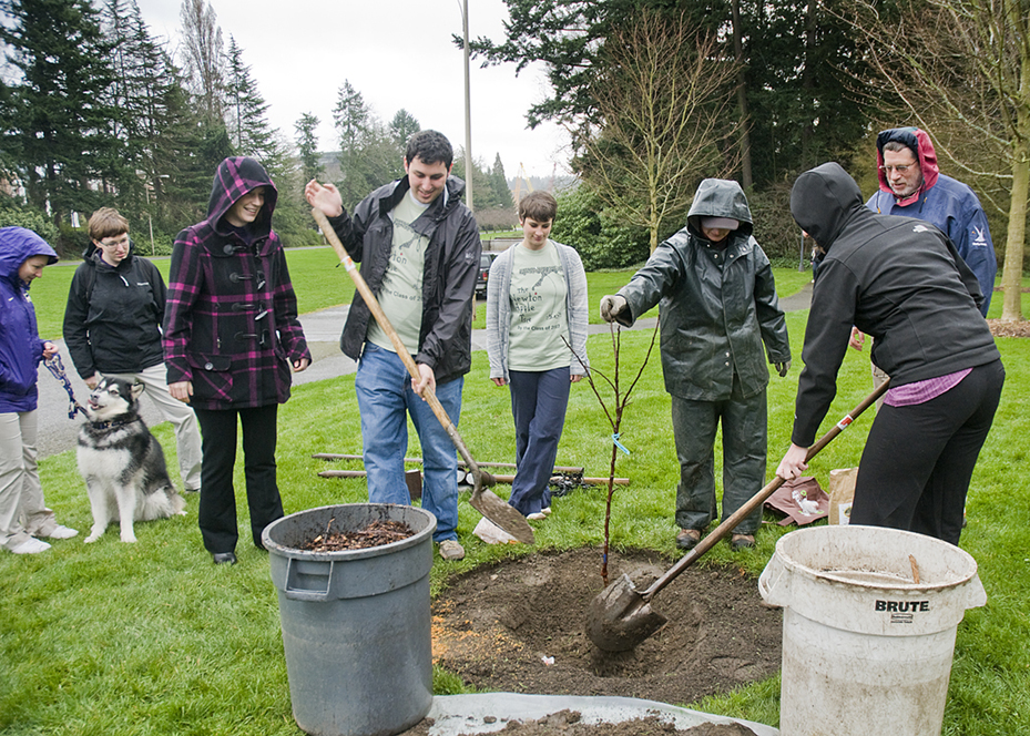 Members of the Class of 2007 help plant a descendant of the tree that legend says inspired Sir Isaac Newtons Theory of Universal Gravitation.
