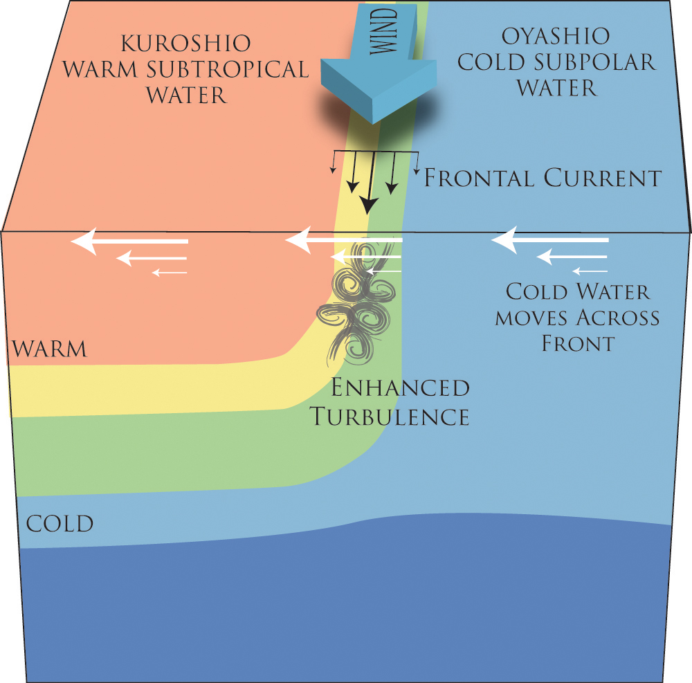Cold heavy water carried over warm lighter water at the Kurioshi front causes energetic turbulence as the top-heavy water seeks equilibrium.