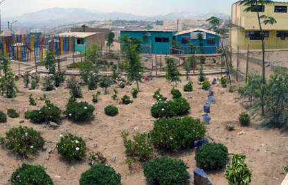 A garden blooms in a Peruvian desert slum through the work of local residents and UW students and faculty.