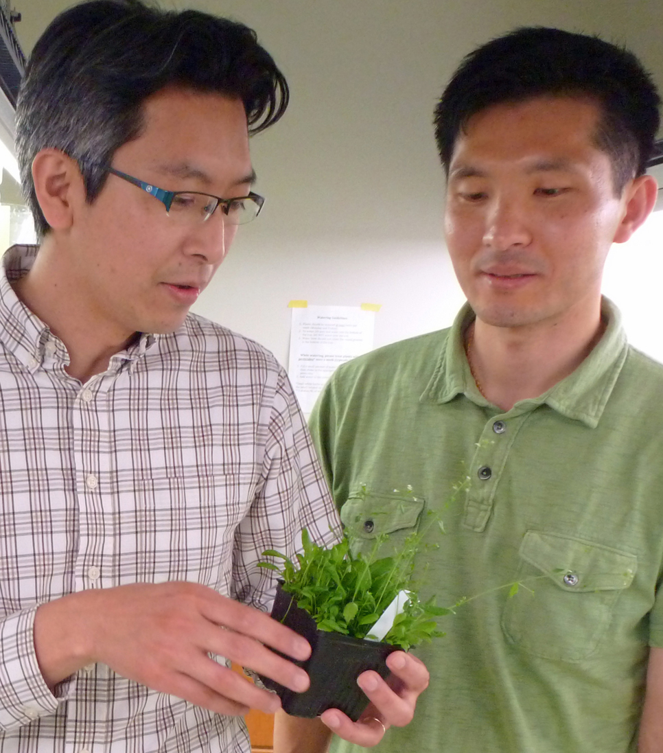 Takato Imaizumi and Young Hun Song in the Takato plant lab at the University of Washington.