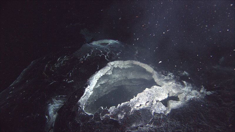 A snow blower vent at the Axial Seamount released microorganisms that are believed to bloom after an eruption.