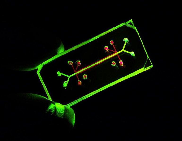 lung ona chip for testing drug safety