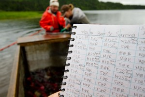 Fisheries scientists at work, sampling and recording data in research notebook