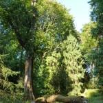 Solar panal in tree in arboretum
