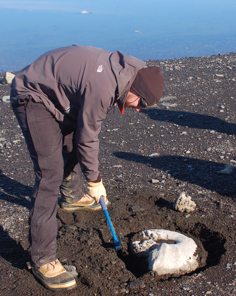 Sand being cleared from a giant ammonite fossil in Antarctica.