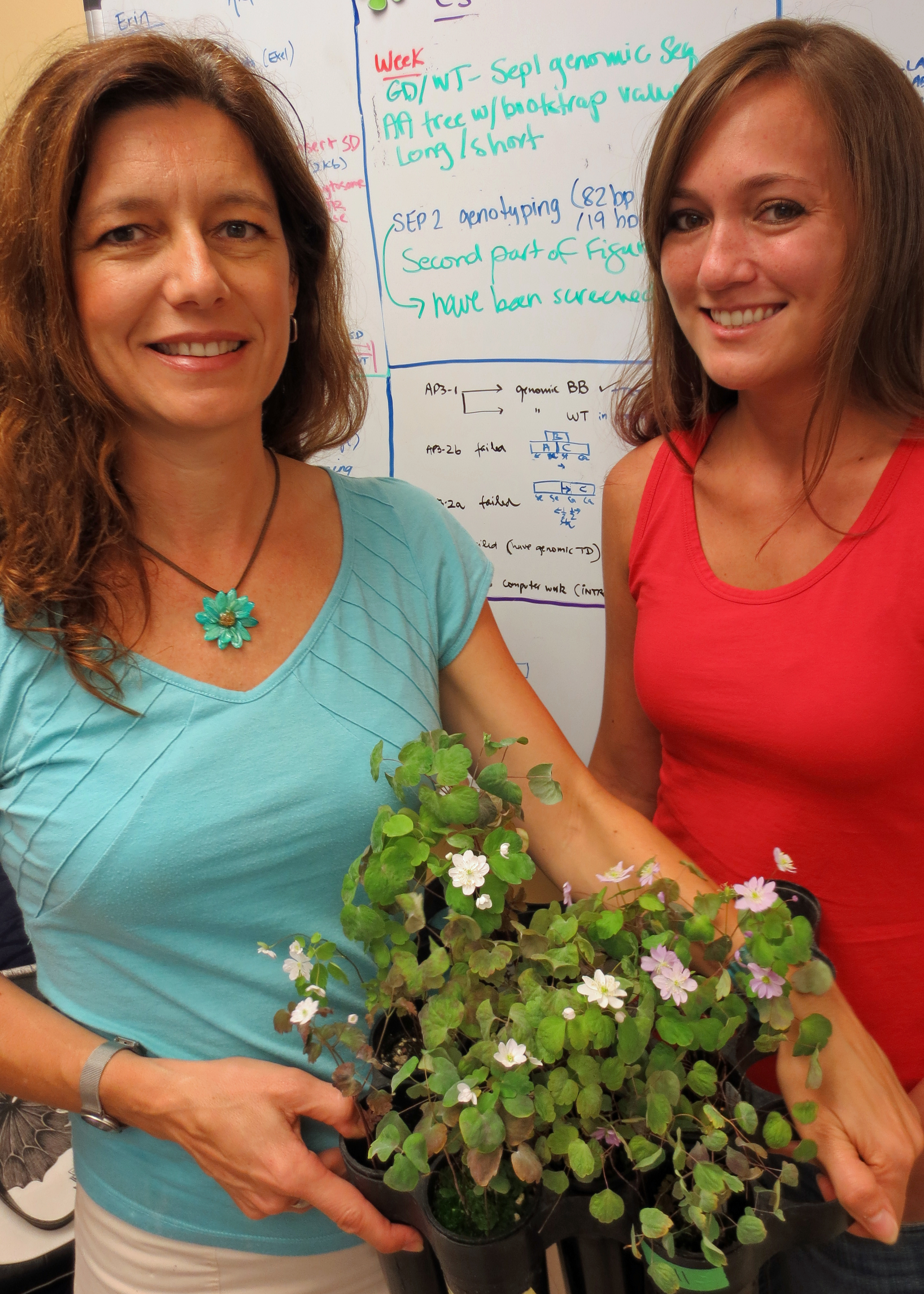 Verónica Di Stilio and Kelsey Galimba with the wild type of plant they studied