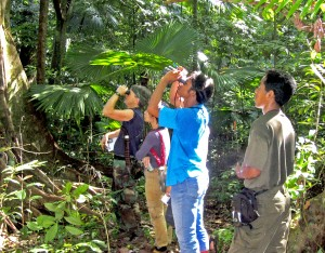 Researchers observe black macaques in the forest