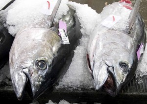 Two big eye tuna await purchase on ice