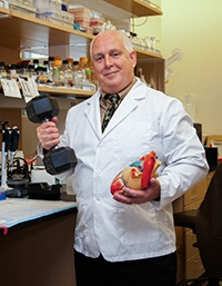 Dr. Michael Regnier, holds a model of a heart in one hand, and a hand weight in another.