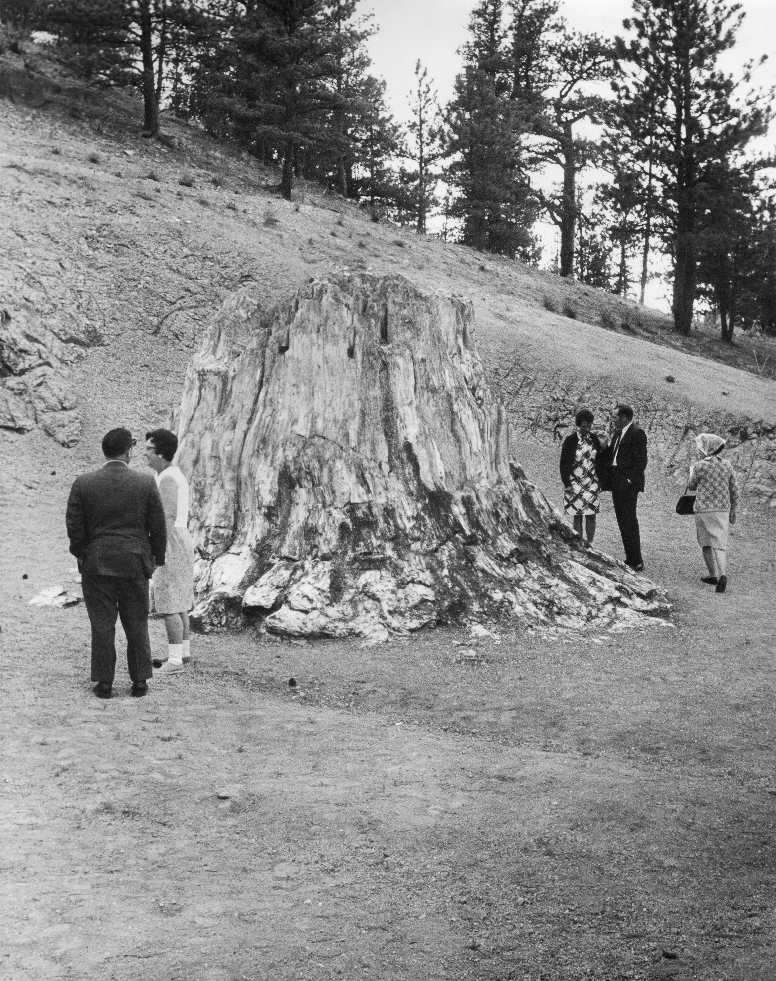 Five people gather around the base of a large petrified stump twice as tall as they are