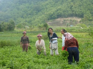 Karo Batak women at work
