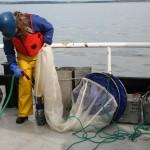 Hosing off a plankton net