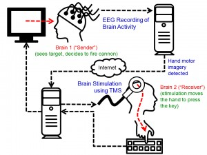 A diagram showing the cycle of the brain-to-brain interface demonstration.