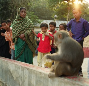 An Asian rhesus macaque sits on a wall near a gathering of people.