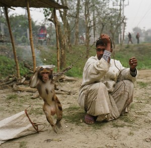 A man with a performing monkey.