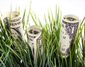 Rolled up dollar bills with blades of grass