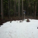 A mounted hunting camera captures snow in a forest gap, while snow appears to have melted under the trees in dense, second-growth forest behind the gap site.