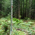 Time-lapse photos of this measuring pole in a forest gap site will track total snowfall in this area.