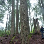 Working in old-growth forests