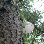 A funnel protects an iButton sensor in a tree.
