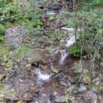 A creek in the watershed.