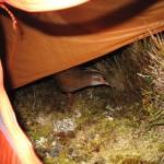 bird in tent