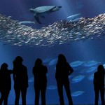 Visitors stand looking through glass as sea animals swim by