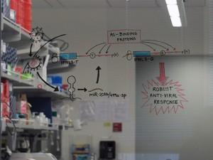 Ram Savan lab window