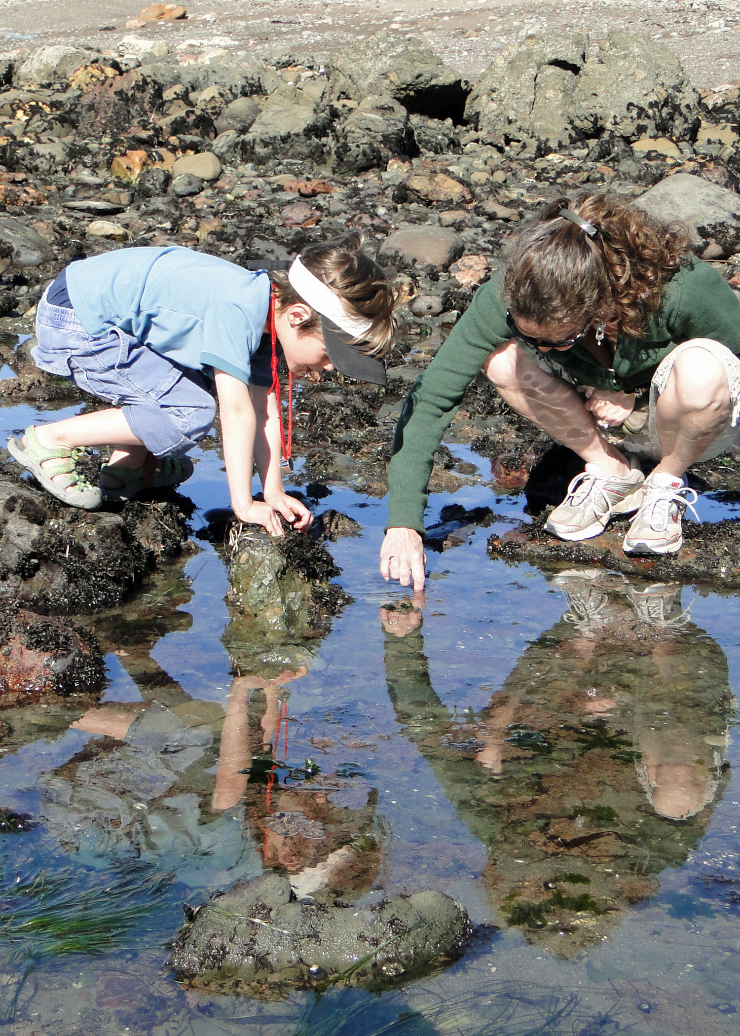 Child and adult reach into tide pool