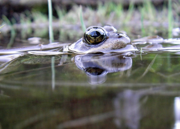 Amphibians In A Vise Climate Change Robs Frogs Salamanders