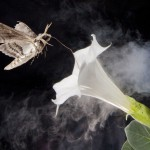 moth with flower and exhaust pipe