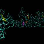 An illustration of the molecular structure of tropoelastin, the smallest unit of the protein elastin.