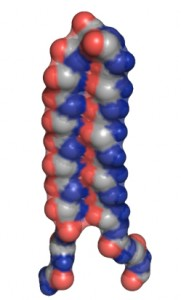 "The UW's designed ""alpha sheet"" protein structure."