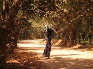 The forest provides firewood for the 40,000 Tamil villagers who live around Auroville, founded in 1968 in South India. Auroville is now home to Auroville is home to 2,000 people from 43 different countries and is one of the few places on Earth where biodiversity is actually increasing.