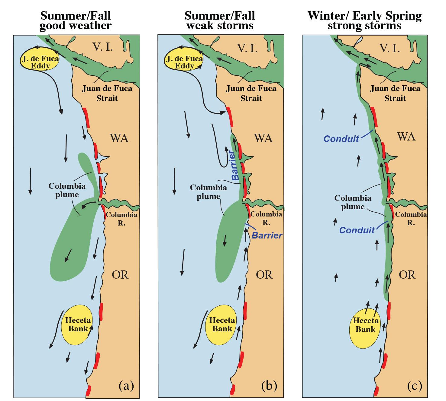 cartoon of algal transport