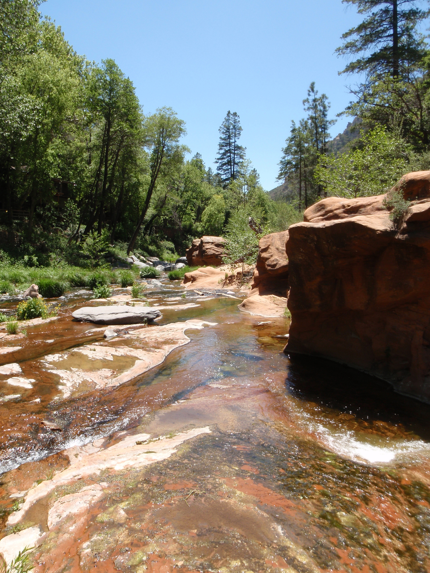 A wide stream flows over rocks between tree covered shores