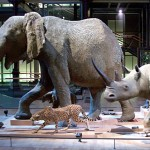 Full-size models of elephant, leopard, rhino on display