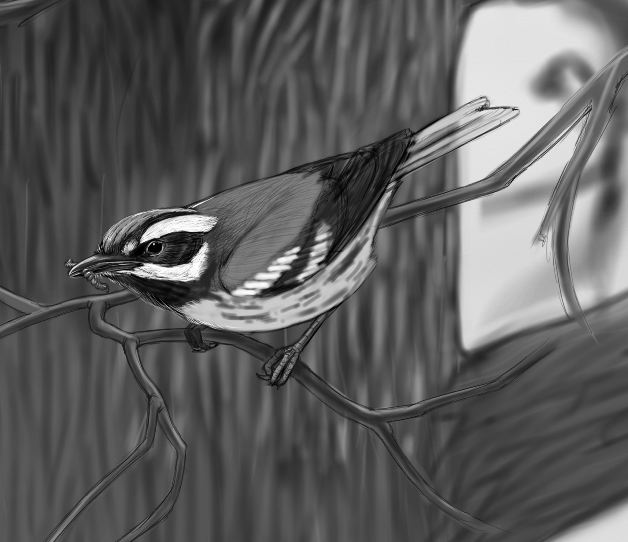 Drawing of bird on branch with grub in mouth