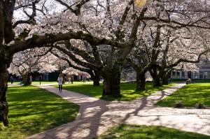 UW Quad in spring.