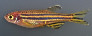 Sideview of fish