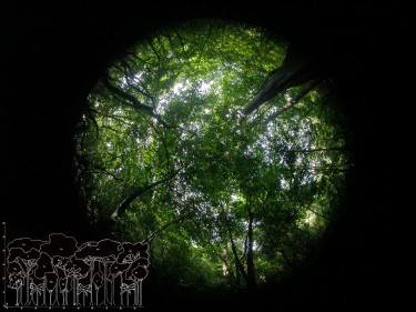 This hemispherical photograph shows the tree canopy cover at a site in Santa Rosa National Park, Costa Rica. The corresponding forest profile (modified from Holdridge et al., 1971) gives a side profile of the forest's density.