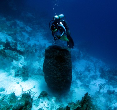 For the Giant Barrel Sponge, mortality rates decrease as size increases.
